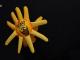 Slniečkar na rukavičke (foto zdroj ZOMRI)